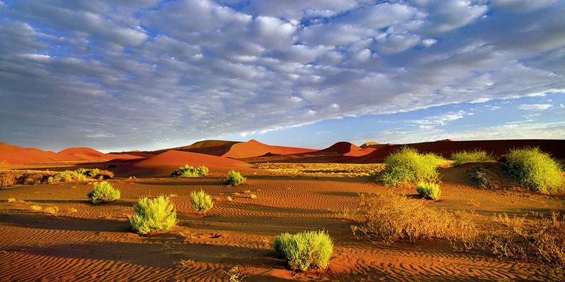 VIVID DESERT