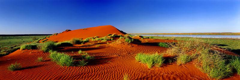 SIMPSON DESERT GARDEN