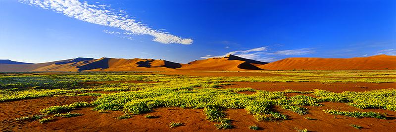 NAMIB DESERT GARDEN